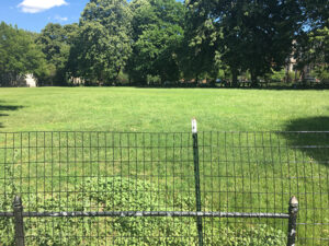 Newly-seeded lawn at Herbert Von King Park