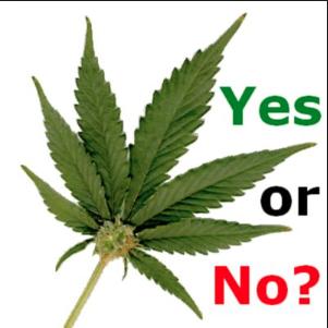Pols Anticipating Polls Make Marijuana Moves