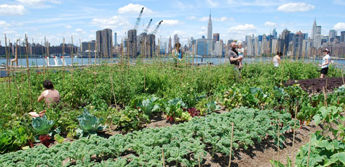 EXPANDING URBAN AGRICULTURE IN NYC