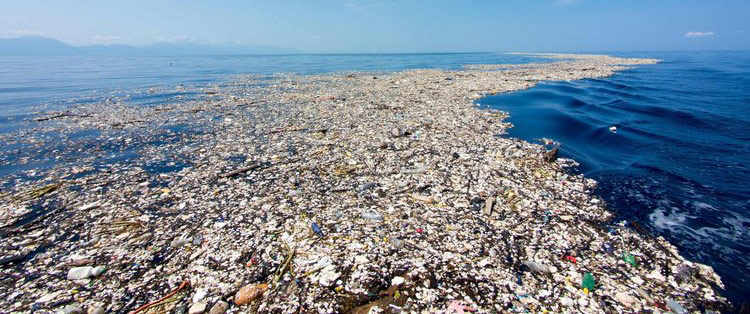 A Global Tragedy for Our Oceans and Sea Life